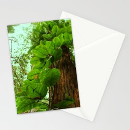 Maui Vines Stationery Cards