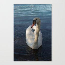 White Swan Beauty Canvas Print