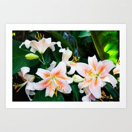 lilies and leaves Art Print