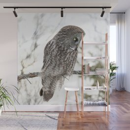 Great grey owl close up Wall Mural