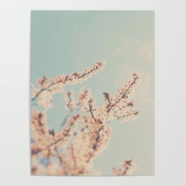 spring is in bloom ...  Poster