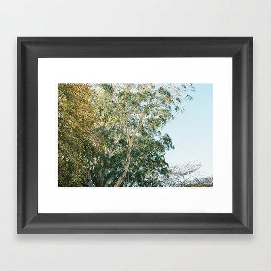 Trees in color Framed Art Print