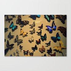Delicate Auras Canvas Print
