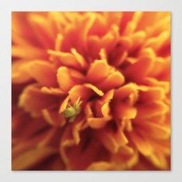Bug a Flower Canvas Print