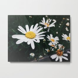 Scottish Flowers Metal Print