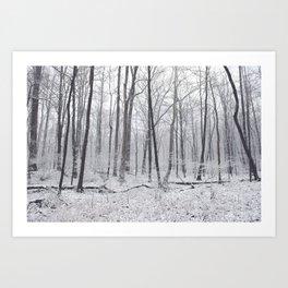 Winter's Woods Art Print