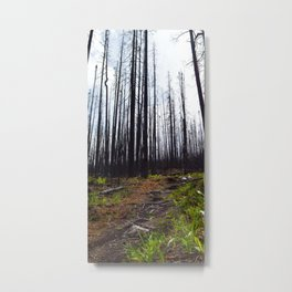 Excelsior Wildfire in the Maligne Valley, Jasper National Park, CA Metal Print