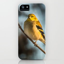 Goldfinch in Winter iPhone Case