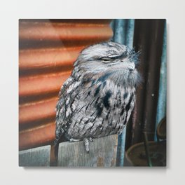 Unimpressed Tawny Frogmouth Metal Print