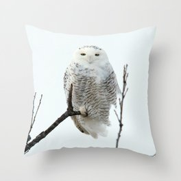 Snowy in the Wind (Snowy Owl) Throw Pillow