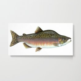 Salmon Artwork Metal Print