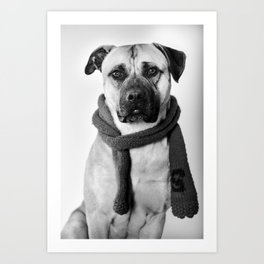 The Scholar - Presa Canario Dog Art Print