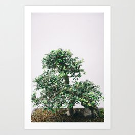 Bonsai Tree - Botanical Minimalist Fine Art Art Print