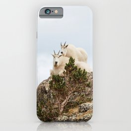 Three Ami-Goats // Scenic Hike Animals Photograph Colorado Wildlife National Park Mountain Goats iPhone Case