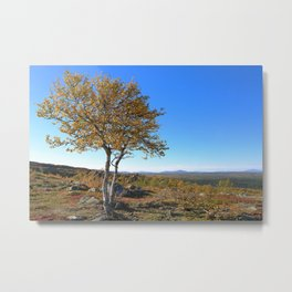 Autumn in the mountains a sunny day with blue sky. Birch with yellow leaves. Metal Print