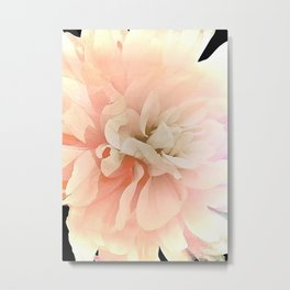 Dahlia, Soft Pink Glow Metal Print