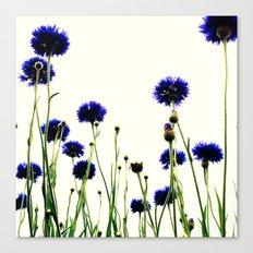 FLOWER 026 Canvas Print