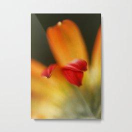 Petals of a Gerber Daisy Metal Print