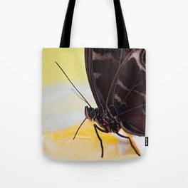 Macro shot of morpho butterfly sitting on orange and eating Tote Bag