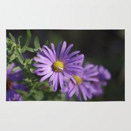 Lovely lavender aster Rug