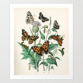 Tortoiseshell butterflies and thistle flowers from Schmetterlings buch, 1883  Art Print