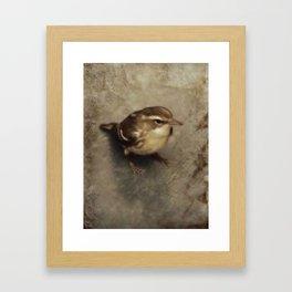 First Fall Female Blackburnian Warbler Framed Art Print