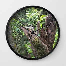 A cyclone damaged tree in the rain forest Wall Clock