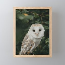 Barn Owl In The Forest Framed Mini Art Print