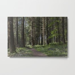 Spruce Woodland Path Metal Print