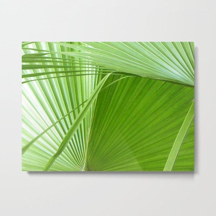 Palm Leaves // Tropical Wall Art, Beach Cottage Decor, Coastal Art Metal  Print