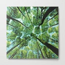 Looking up in Woods Metal Print