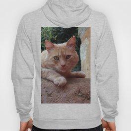 Red Cat Hoody