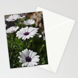 Margherite flovers Stationery Cards