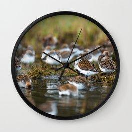 Shorebirds I Wall Clock