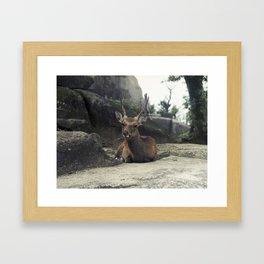 Deer on Rock Framed Art Print