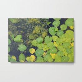Pond by Althéa Photo Metal Print