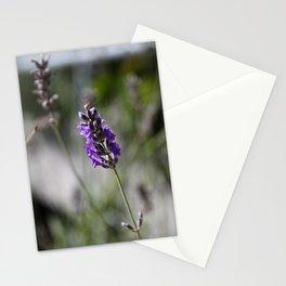 lavendar Stationery Cards