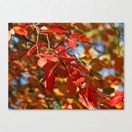 Flaming Foliage Canvas Print