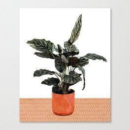 Calathea Planter Canvas Print