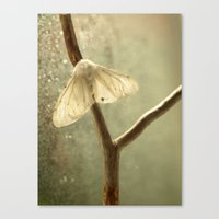 moth Canvas Prints featuring moth by Nature In Art...