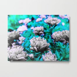 Pop paeony Metal Print