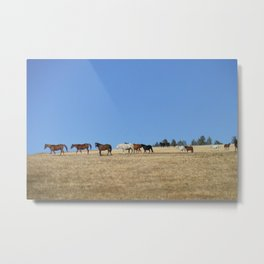 Horses in the Pasture Photography Print Metal Print