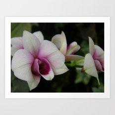 Orchids #2 Art Print