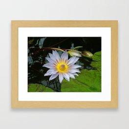 Flower Pic 4 Framed Art Print