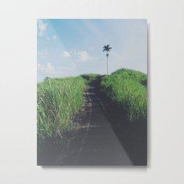Single tree path Metal Print