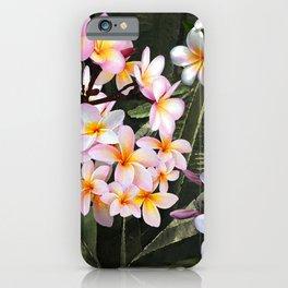Hawaiian Pink Plumeria Blossoms iPhone Case