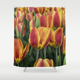 Orange Tulips on Cape Ann Shower Curtain