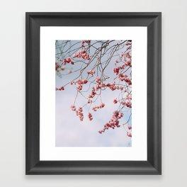 tree branches 2 Framed Art Print