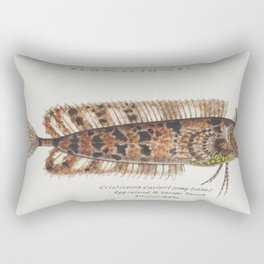 Antique fish possibly cristiceps australis weedfish drawn by Fe Clarke (1849-1899) Rectangular Pillow
