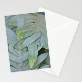 TEXTURES -- Ferns Enfolded Stationery Cards